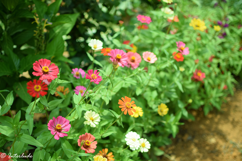 FloralBliss-6
